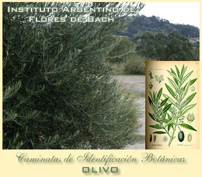 Caminatas de Identificacion Botanica